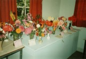 AWI468 Year unknown Flower Show exhibits AW