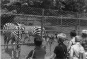 CLR215 School trip to Paignton Zoo