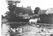 DHO077 Seavington pond with horse