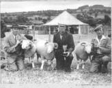MWH832  Chard Sheep Show.