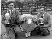 PWA434 1950s Jack Jeffery with his shepherd Fred Gale and his prize winning Dorset Horn sheep and their trophies