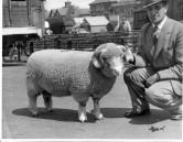 PWA435 1950s Jack Jeffery with his Dorset Horn sheep