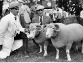 PWA439 1950s Jack Jeffery with his shepherd Fred Gale and their prize winning sheep