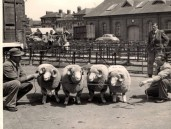 PWA441 1950s Jack Jeffery and his shepherd Fred Gale with their sheep at market