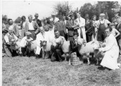 PWA440 1950s West Street Farm shepherd Fred Gale and others