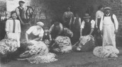 V&E234 1910 Sheepshearing at Manor Farm