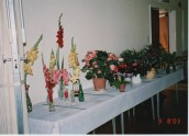 VJA496 2003 SGC Flower Show (4)