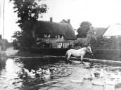 MWY239 Seavington Pond with horse