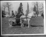 DHO075 1939 Mr Robert Hole - The Beeches with Simon the horse