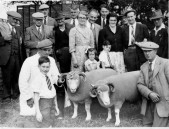 PWA442 1950s West Street Farm shepherd Fred Gale with some of their prize winning sheep
